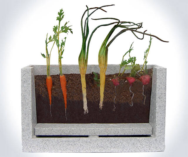Transparent Root Vegetable Farm - http://coolthings.us