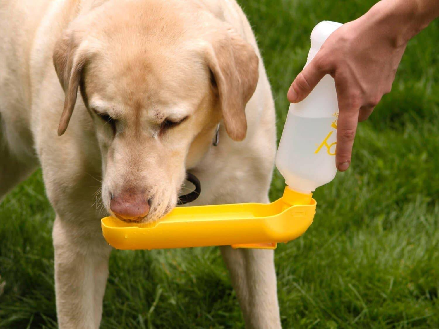 Water Bottle for Dog - http://coolthings.us