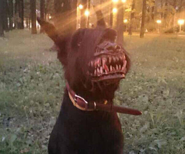 Werewolf Dog Muzzle - coolthings.us