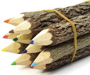 Wooden Branches Colored Pencils